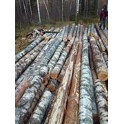 Деловой лес: - БЕРЕЗА от 16 до 72 см фото