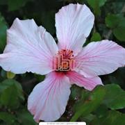 Продажа цветочной продукции фото