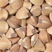 Закупаем зерно гречки фото