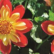 Фотовитраж ПР-34 Солнечный сад фото