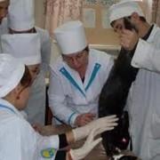 Факультета ветеринарии и технологии продовольственных продуктов фото