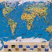Карта животных мира 110х80 см - ламинированная Код товара 886015 фото