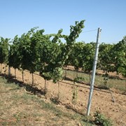 Виноградные опоры фото