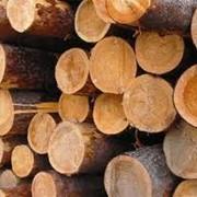 Заготовка и вывозка древесины, ее раскряжевка, производство деловой древесины и лесоматериалов круглых, производство пиловочника, фанерного, спичечного и технологического сырья, добыча живицы. фото