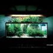 Ландшафтный дизайн аквариумов фото