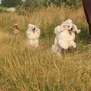 Передержка собак фото