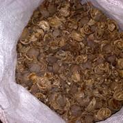 Скорлупа грецкого ореха фото