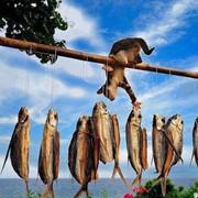 Переработка рыбы фото