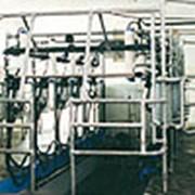 Доильный зал «Ёлочка» фото