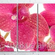 Модульна картина на полотні Рожева орхідея код КМ100200(200)-070 фото