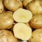 Картофель опт фото