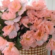 ПИОН розовый фото