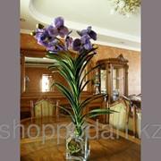 Орхидея синяя Код: A0013 фото