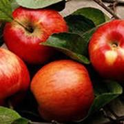 Яблоки сладкие фото