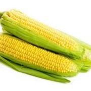 Продажа кукурузы фото