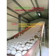 Птицефабрики - поставки и монтаж оборудования от завода-производителя, строительство быстро возводимых зданий. фото