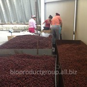 Плоды шиповника (Selling dried rose hips ) фото