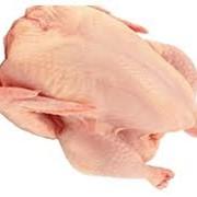 Бройлерные курицы. фото