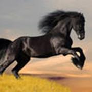 Услуги ветеринарные для лошадей фото