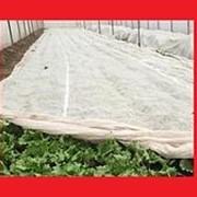 Агроспан белый, плот. 60гр/м2 3,2м, 200м фото