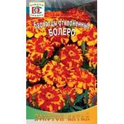 Цветы Бархатцы Болеро (0,8г) фото