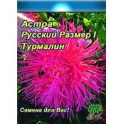 Цветы Астра Русский огород Фирменная смесь (0,3г) фото