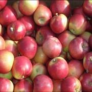 Яблоки Монтуан фото