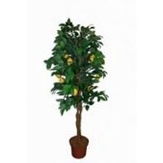 Искусственное дерево Лимон Гемп (Код товара: 47541) фото