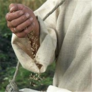 Протравливатели семян фото
