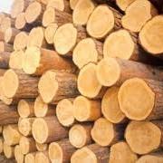 Лес кругляк рудстойка, пиловочник фото