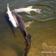 Рыбалка в Астрахани фото