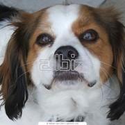 Вакцинация собак фото