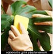Уход за растениями. фото