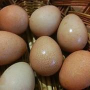 Яйца Цесарки фото