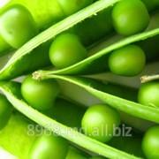 Горошек зеленый фото