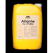 Атланте Медь -Пролина фото