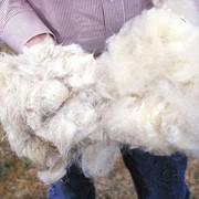 Шерсть овечья, Шерсть овцы, Шерсть овец, Руно фото
