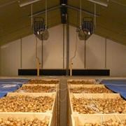 Системы активной вентиляции для овощехранилищ фото
