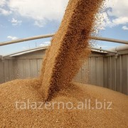 Зерно фуражное оптом от производителя. Экспорт. Документы. фото