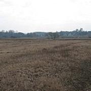 Земельный участок 45 соток рядом водоем 10 гектар. фото