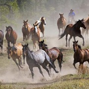 Лошади фото