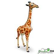 Фигура Жираф большой фото