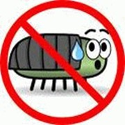 Уничтожение клопов, выведение насекомых в Екатеринбурге фото