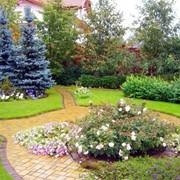 Ландшафтный дизайн сада, Крым фото