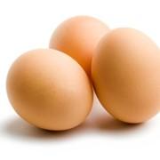 Яйцо куриное пищевое фото