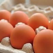 Яйцо куриное диетическое фото
