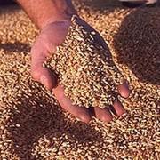 Сушка при влажности зерна до 19% включительно за каждый тонно-процент снятия влажности (пшеница) фото