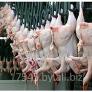 Мясо цыплят бройлеров , разделка фото