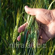 Консультации агронома, консультации в сфере агро-бизнеса фото