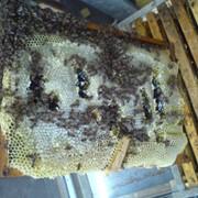Продам Мед , джантаковый мед) ( майский, кускут, курай), сотовый мед урожай 2015 года воск., пыльца фото